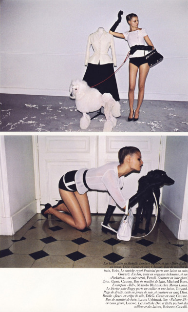 editorial with dogs unknown 3